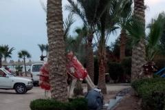 kamel traenke